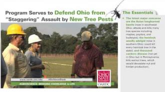 "Program Serves to Defend Ohio from ""Staggering"" Assault by New Tree Pests"