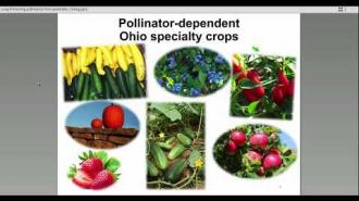Protecting Pollinators from Pesticides with Elizabeth Long