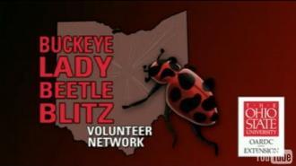 Buckeye Lady Beetle Blitz