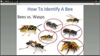 Identifying Native Bees with Olivia Carril