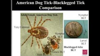 Emerging Tick-borne Diseases: Lyme Disease, the Blacklegged Tick and More