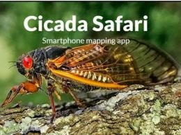 cicada safari smartphone mapping app
