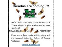 report cicadas