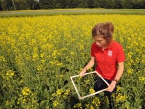 Hannah with canola
