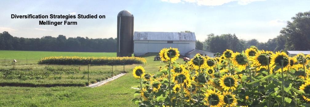 Mellinger Farm