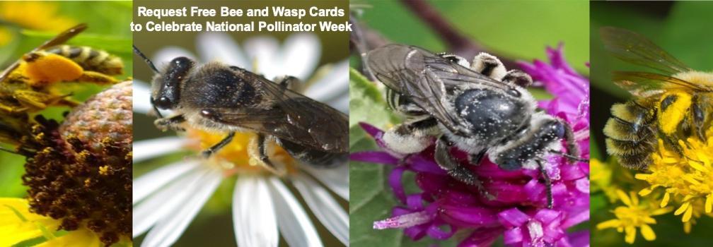 Free Bee Card